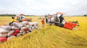 Phó thống đốc: Sẽ cho vay không có tài sản bảo đảm đối với ngành lúa gạo