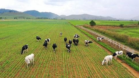 Đẩy nhanh tiến độ hoàn thành giai đoạn 1 tổ hợp trang trại tại Lào của Vinamilk