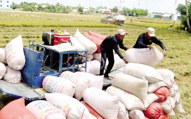 Việt Nam vững ngôi đầu thế giới về xuất khẩu gạo