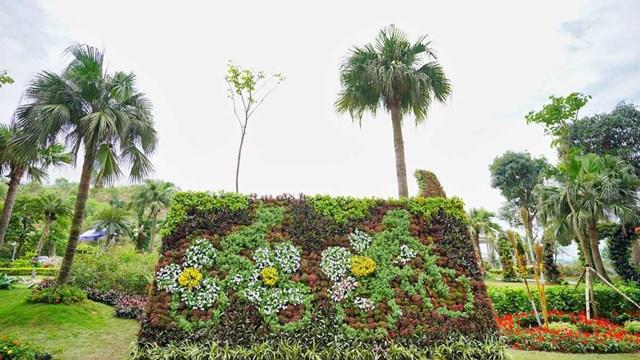 Ngàn hoa khoe sắc trên đồi cao tại Hạ Long thu hút du khách dịp 30/4 - Ảnh 8