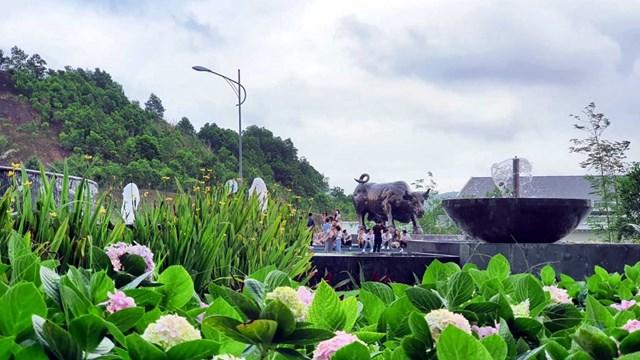 Ngàn hoa khoe sắc trên đồi cao tại Hạ Long thu hút du khách dịp 30/4 - Ảnh 10