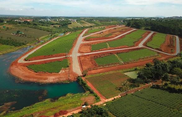 Đồi chè tuyệt đẹp tại thôn 12 (xã Đam B'ri, Tp.Bảo Lộc) cạnh hồ nước và rừng thông đã có đường nhựa bên trong dù chưa được cấp phép làm đường - Ảnh: M.VINH
