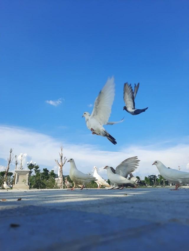 Chim hòa bình tung cánh tại Danko City.