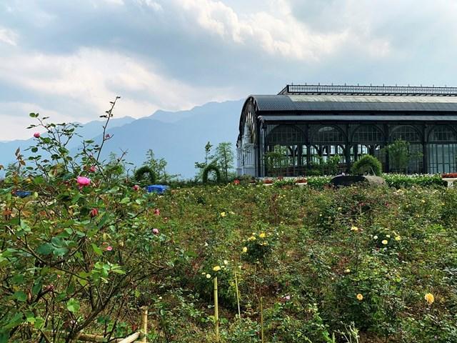 Mục sở thị vườn hồng lớn nhất Sapa, hứa hẹn sẽ là địa điểm sống ảo triệu Like hậu Covid 19 - Ảnh 7