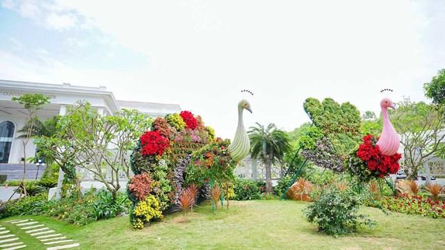 Ngàn hoa khoe sắc trên đồi cao tại Hạ Long thu hút du khách dịp 30/4